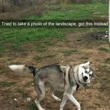 Funny Animal Pictures Memes - 21 funniest animal memes you should not miss ladnow