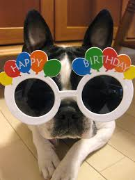 Boston Terrier Meme - boston terrier happy birthday meme terrier best of the funny meme