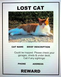Lost Cat Meme - how to make a missing cat poster roberto mattni co