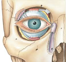 Eye Ducts Anatomy Tear Production U0026 Crying
