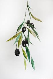 101 best leaves images on pinterest olive branches olive tree