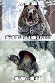 Bear Cocaine Meme - one does not simply hate cocaine by ak memes meme center