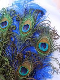 peacock fan 191 best peacock fan images on peacock feathers fans