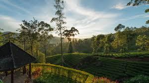 ceylon tea trails hatton a kuoni hotel in kandy u0026 nuwara eliya