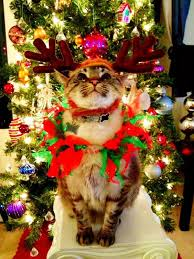 cat christmas 12 days of grumpy cat christmas cat christmas and