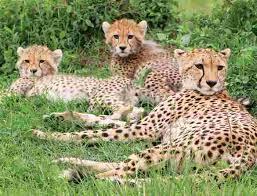Wildlife tours intrepid travel us