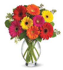 gerbera bouquet teleflora bright gerbera daisies bouquet nationwide flower delivery