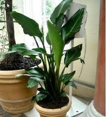 the 25 best small indoor plants ideas on pinterest indoor