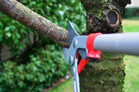 heritage tree care tree cutting tree removal tree care