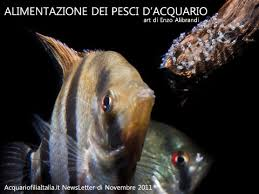 pesci alimentazione alimentazione dei pesci d acquario con piccola guida ai mangimi