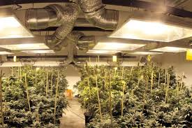 Best 25 Marijuana Grow Lights by The 21 Best Growroom Tips And Tricks From Pros High Times