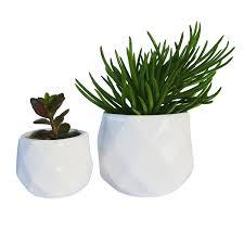 amazon com modern small succulent planters cute window planters