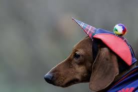 Dachshund Halloween Costumes Halloween Costumes Dogs Cutest Puppy Costumes 2011