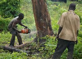 irin experts rally for agroforestry commercial tree farming