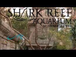 Mandalay Bay Buffet Las Vegas by Shark Reef Aquarium At Mandalay Bay Las Vegas Tour U0026 Review Youtube
