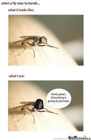 Fly Meme - evil fly by vemes meme center