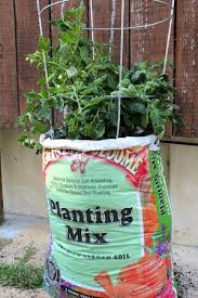 best 25 potting soil ideas on pinterest succulent soil growing