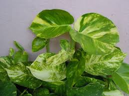5 houseplants that improve air quality inside homes ggproperties