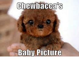 Chewbacca Memes - chewbacca baby picture chewbacca meme on me me