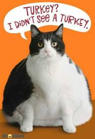 cat thanksgiving quote pictures photos and images for