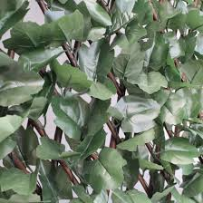 artificial maple leaf ivy on expanding willow trellis 1m x 2m