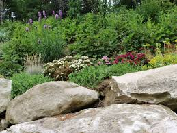 native plants st louis landscaping services st louis