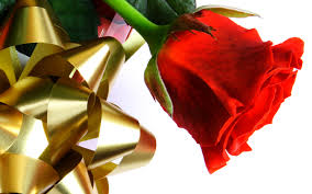 beautiful red love rose wallpapers hd wallpapers