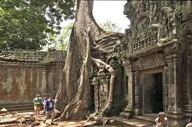 photo fig trees at ta prohm ruins angkor wat cambodia