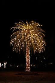10 best christmas u0026 outdoor lights holiday palm trees warm winter