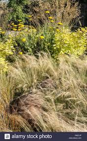 ornamental grasses in a demonstration show garden in uk stock