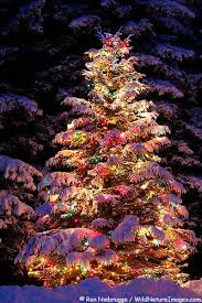 white outdoor lighted christmas trees christmas tree woodland creatures creatures and lighted christmas