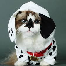 Cat Halloween Costumes Cats 25 Costumes Cats Ideas