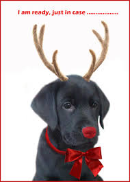 dog christmas cards black lab merry happy christmas day card puppy dogs santa