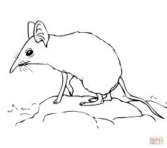shrew coloring pages free coloring pages