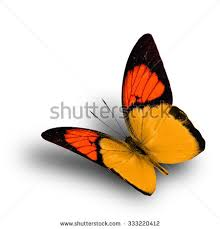 beautiful flying orange butterfly on white stock photo 333220412