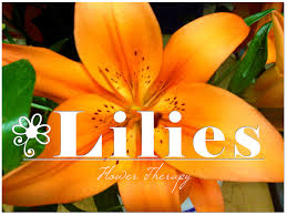 lilies flower lilies archives freytags florist
