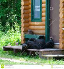 bear on cabin porch stock images image 33056804