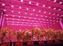 Best Led Grow Lights Research Archives Best Led Grow Lights 2016 2017