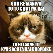 Memes Trolls - latest collection of bakchod billi memes trolls and funny images