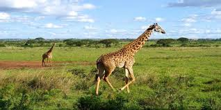 Cheap Flights On Thanksgiving Flights To Kenya In The 600s Roundtrip Including Thanksgiving