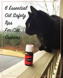 6 essential oil safety tips for cat owners meow lifestyle