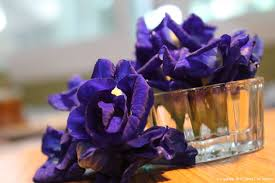 magical blue butterfly u2026 butterfly pea flowers healthy living