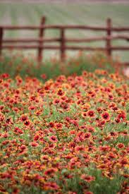 irish native plants 464 best wildflowers images on pinterest wildflowers wild