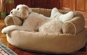 what are the best dog beds under 100 yow nu
