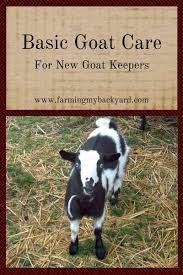 Backyard Cattle Raising Basic Goat Care For New Goat Keepers Farming My Backyard
