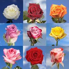 bulk roses bulk special roses global