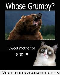 Coke Bear Meme - 97 best funny bears memes and pics images on pinterest funny