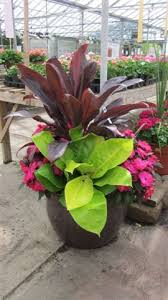 Tropical Potted Plants Outdoor - 38 best tropical plants images on pinterest tropical plants