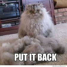 Meme Angry Cat - angry cat weknowmemes