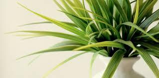 best indoor house plants how to pick the best indoor plants the best gardening advice